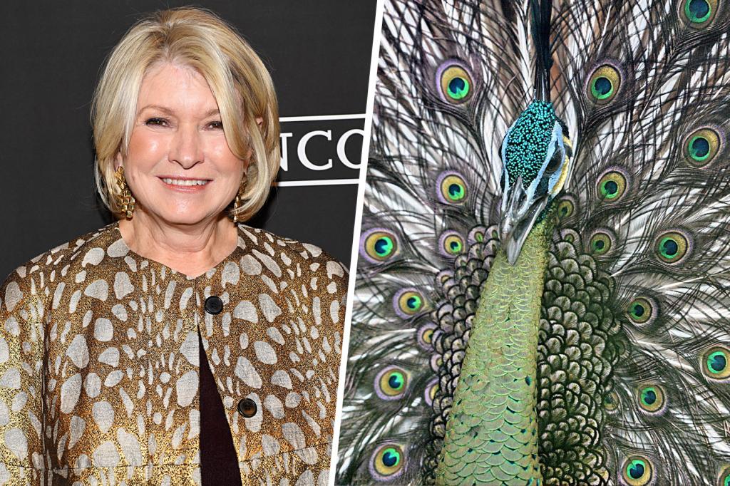 Martha Stewart's Peacocks   Weird celebrity animals   InstantHub